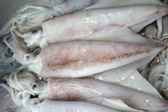 Some freshly caught squid at a wet market Stock Images