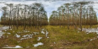 Walking trial in the forest - panorama 360. Poland 2013. Photo taken in spherical technique with fisheye lens and assembled from 12 separate exposures Royalty Free Stock Photography