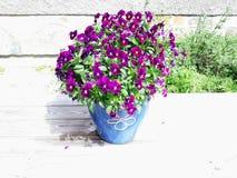 Photo of beautiful purple flowers in very light sunshine royalty free stock image