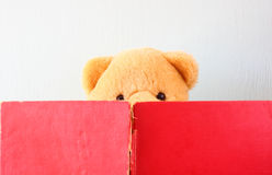 Photo of teddy bear reading book. Stock Image