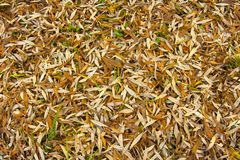 Photo texture of fallen autumn leaves. Photo texture. Carpet of fallen autumn leaves royalty free stock images