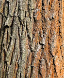 Photo texture of an old tree Stock Photos