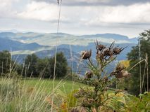 Prickle. Photo of a thorn in the background of mountains. Spain Royalty Free Stock Photography