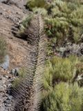 Prickle. Photo of a thorn in the background of mountains. Spain Royalty Free Stock Image