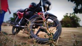 Photo of thorns click at mathura vrindavan stock image