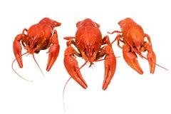 Photo of three boiled crayfish Stock Photos