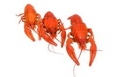 Photo of three boiled crayfish Royalty Free Stock Photo