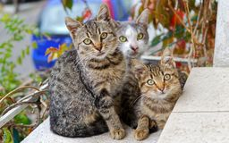 Photo of Three Cats royalty free stock image