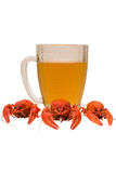 Photo of three crayfish with a beer glass Stock Photos