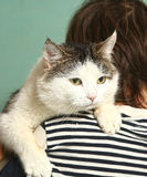 Photo of tom cat on boys shoulder. Close up photo of tom cat on boys shoulder royalty free stock photos