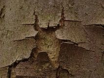 Tree bark with hole. In the photo is tree bark with hole. Photo was made in the forest Royalty Free Stock Image