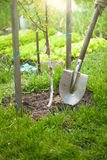 Photo of tree being planted by shovel at sunny day Stock Photography