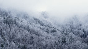 Photo of Tree Cover With Snow Royalty Free Stock Photo