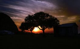 A shot of two trees near a house while the sun sets.