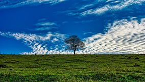 Tree isolated on the field between a fence at the top of the hill with blue sky with clouds. Photo of Tree isolated on the field between a fence at the top of stock photos