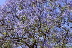 Photo of a tree with purple flowers stock photography