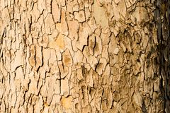 The bark wounds. Photo of a tree trunk shot with a macro lens. Ideal for a background.n Stock Image