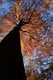 Structure of the tree in the autumn stock image