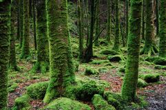 Photo of Trees Covered in Moss Stock Photos