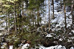 Trees On A Mountain. A photo of trees on a mountain area somewhere in Romania Stock Images
