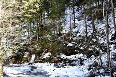 Trees On A Mountain. A photo of trees on a mountain area somewhere in Romania Royalty Free Stock Photo