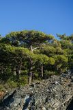 Photo of trees on mountain slope. Against blue sky Royalty Free Stock Photography