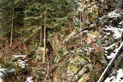 Trees On A Mountain. A photo of trees and rocks  on a mountain area somewhere in Romania Stock Images