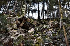 Trees On A Mountain. A photo of trees and rocks on a mountain area somewhere in Romania Royalty Free Stock Photo