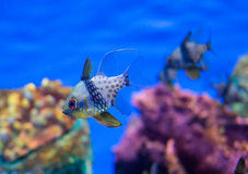 Photo of a tropical Fish Stock Photo