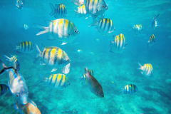 Photo of a tropical Fish on a coral reef Stock Image