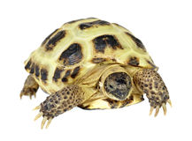Photo of turtle on a white background Stock Photo