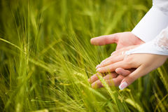 Photo of two tender hands Royalty Free Stock Photo