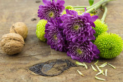 Photo of two walnuts, green and purple chrysanthemums on wood ta Stock Image