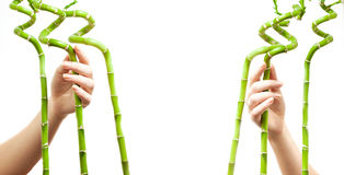Photo of two women hands holding bamboos Stock Photos