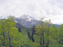 View of Utah Mountain  Stock Photography