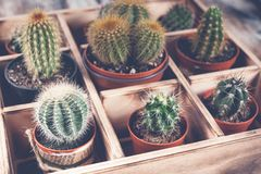 Close-Up Cacti in wooden box. Photo of various types of cacti. Image toning. Photo of various types of cacti. Close-Up Cacti in wooden box. Image toning royalty free stock photo