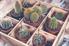 Close-Up Cacti in wooden box. Photo of various types of cacti. Image toning. Photo of various types of cacti. Close-Up Cacti in wooden box. Image toning royalty free stock photos