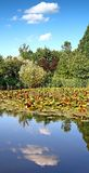 Photo verticale des arbres et de l'eau Photographie stock libre de droits