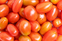 Photo of very fresh tomatoes Royalty Free Stock Image