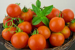 Photo of very fresh tomatoes presented on white background Royalty Free Stock Photography