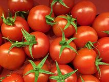 Photo of very fresh tomatoes Stock Photos