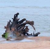 Interesting Driftwood stock image