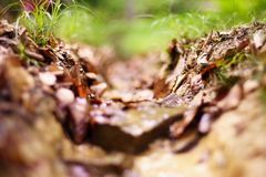 A photo with a very shallow depth of field showing the path in the forest with vegetation. Very large blur background. A photo with a very shallow depth of Stock Images