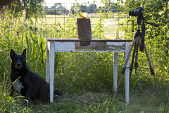 Photo and video shooting in the apiary Royalty Free Stock Images