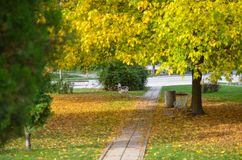 Photo of walking path in a small city park in a misty town surrounded by fallen yellow fall leaves Stock Photo