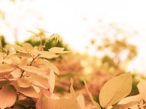 Photo wallpaper leaves, macro, trees, background, tree, Wallpaper, yellow leaves Falling autumn leaves over Yellow Blurred Fall stock image