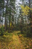 The autumn photo with forest and path. stock images
