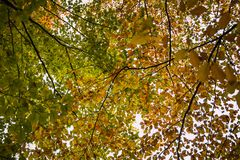 The autumn view through the colorful leaves. royalty free stock image