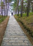 Wooden footpath in nature reserve, Europ Royalty Free Stock Image