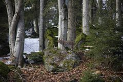 Lynx on the rock. Photo was taken in Bavarian Forest National Park Stock Photography